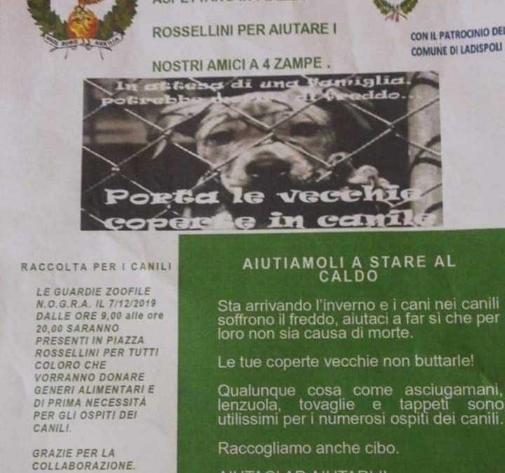 Ladispoli, raccolta di cibo per gli animali indetta dalle Zoofile del Nogra