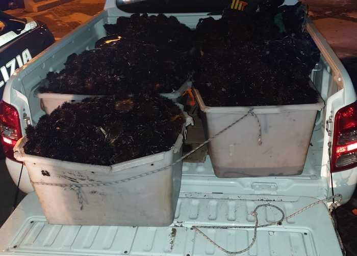 Sequestrati 5mila ricci di mare, beccati due pescatori abusivi a Civitavecchia