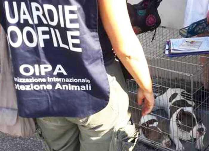 """Cani """"mutilati per bellezza"""": la denuncia dell'Oipa"""