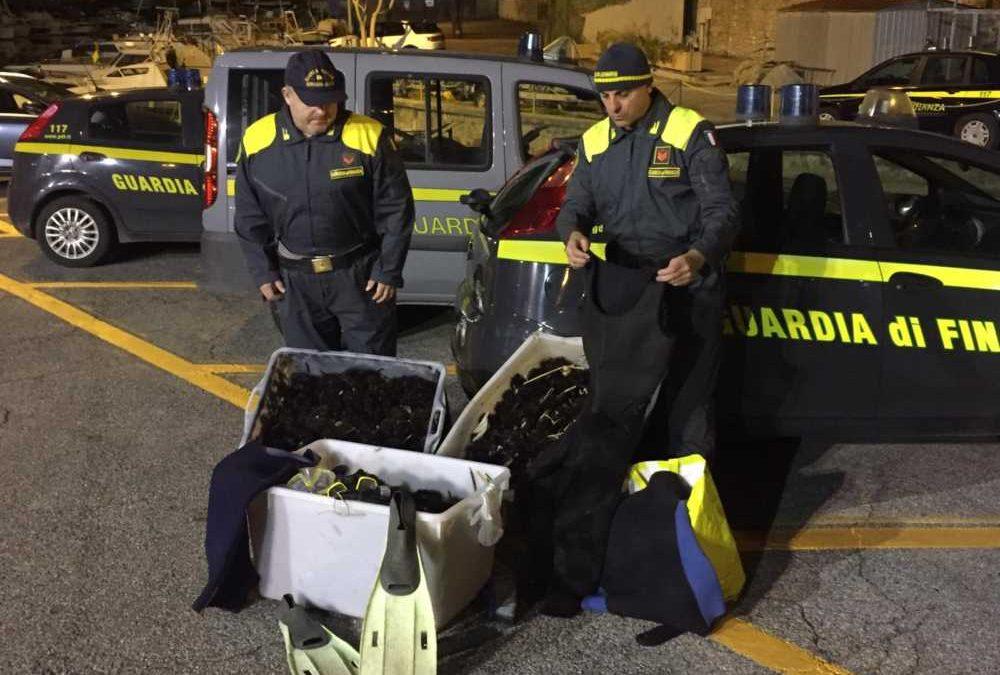 Pescatori di frodo fermati a Santa Marinella dalla Finanza: sequestrati 4mila ricci