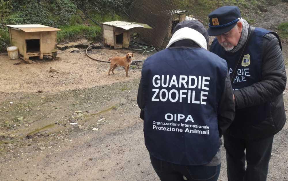 Cani da caccia maltrattati: 32 animali salvati dall'Oipa fra Civitavecchia, Tolfa e Allumiere